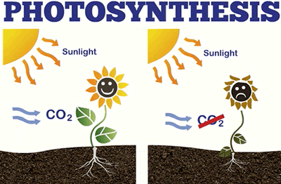 Diagram of Photosythesis with and without CO2.