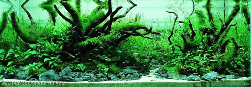 Photo of a planted aquarium