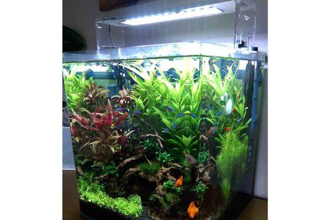 Chihiros AquaSky LED lighting on a planted tank. Aquarium Use  sc 1 st  CO2 Supermarket & Chihiros AquaSky LED Lighting | CO2 Supermarket